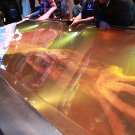 The giant squid at Te Papa Museum
