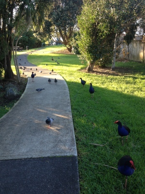 Moana and I literally got chased by these birds. It was pretty bloody scary.